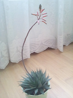 Отдается в дар Отросток от цветка