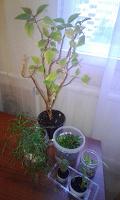 Отдается в дар Растения комнатные