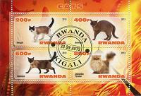 Отдается в дар П.б. Кошки — 2 (Руанда)