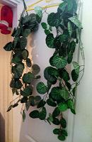 Отдается в дар Искусственные растения и цветы
