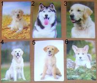 Отдается в дар Календарики стерео с собаками