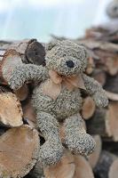 Отдается в дар медвежонок