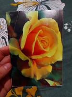 Отдается в дар Открытка с розой