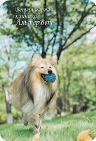 Отдается в дар карманные календарики.собака