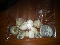Отдается в дар Ракушки и камни