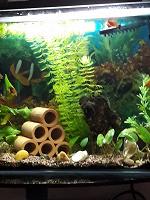 Отдается в дар Растение в аквариум