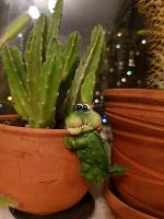 Отдается в дар Крокодильчик на цветочный горшок