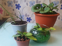 Отдается в дар Комнатные растения на солнечное окошко.