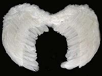 Отдается в дар Крылья ангела