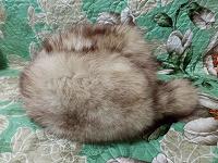 Отдается в дар Меховая шапка-ушанка 55-56 см в объеме