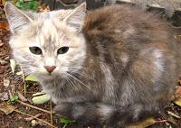 Отдается в дар Котёнок, котята