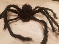 Отдается в дар Меховой паук