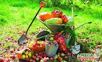 Отдается в дар Урожай