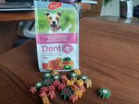 Отдается в дар Собакам