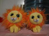 Отдается в дар два большеглазых львенка