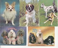 Отдается в дар Календарики с собаками