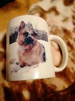 Отдается в дар Кружка Собака