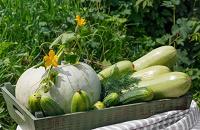 Отдается в дар Овощи и фрукты
