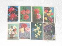 Отдается в дар ***Календарики — цветы