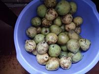 Отдается в дар Ассорти яблоки и груши, 3 кг срочный дар