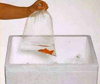 Отдается в дар Пакеты для транспортировки рыбок