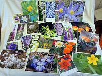Отдается в дар Фотографии Цветы и прочее