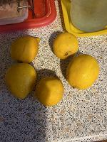 Отдается в дар Лимончики на пирог или компот 5 шт