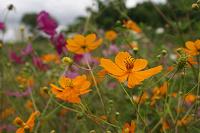 Отдается в дар Семена однолетних цветов