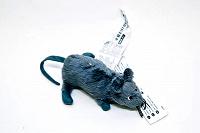 Отдается в дар Крысеныш