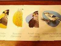 Отдается в дар Познавательные картинки с птицами