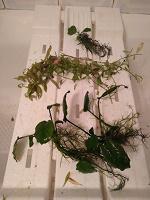 Отдается в дар Растения для аквариума