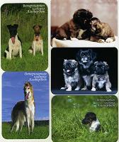 Отдается в дар карманные календарики.собаки
