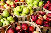 Отдается в дар Два мешка яблок, антоновка и поздние кисло-сладкие.