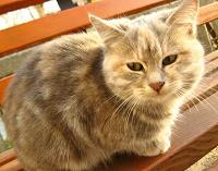 Отдается в дар Котёнок девочка 4 месяца серая