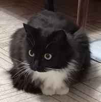 Отдается в дар Кошка и котята (котенок-мальчик и котенок девочка)