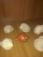 Отдается в дар ракушки морские для декора