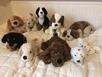 Отдается в дар Собаки меховые