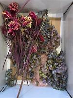 Отдается в дар Сухие цветы