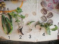 Отдается в дар Ростки комнатных растений