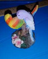 Отдается в дар Попугаи-Неразлучники