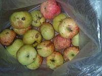 Отдается в дар яблоки на шарлотку