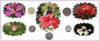 Отдается в дар Цветы на монетах