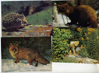 Отдается в дар открытки со зверями