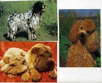 Отдается в дар открытки. собаки.