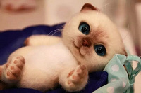 Отдается в дар котик в мешке «бижутерия»