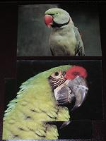 Отдается в дар открытки с попугаями