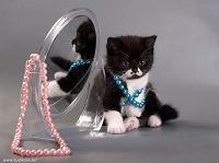 Отдается в дар Бижутерный кот в мешке