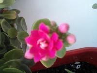 Отдается в дар Цветок домашний