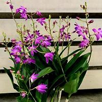 Отдается в дар Орхидем