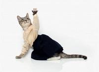 Отдается в дар Одежно-аксессуарный кот